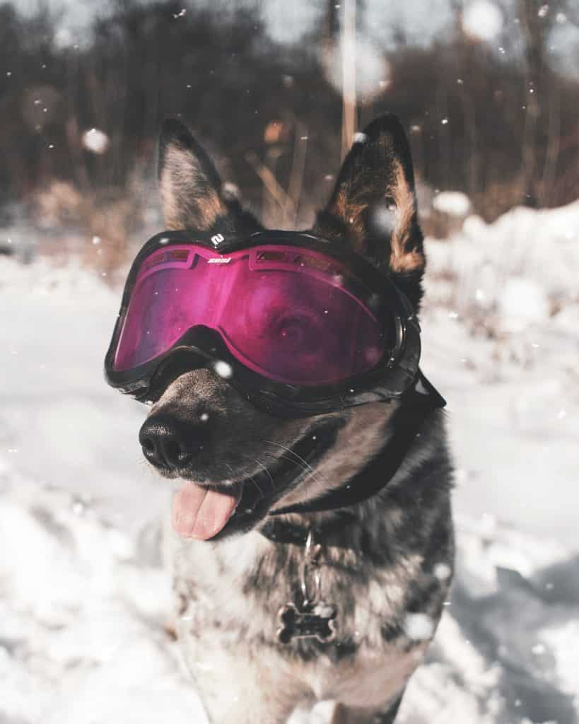 funny picture of dog wearing snow goggles. Photo by Daniel Lincoln on Unsplash
